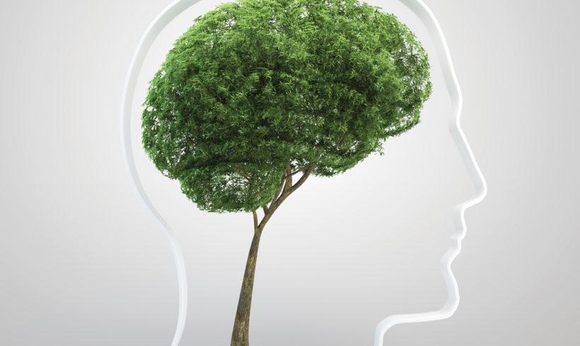 Revolucija održivog razvoja